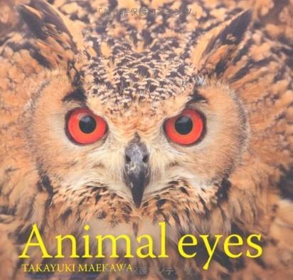 animal-eyes