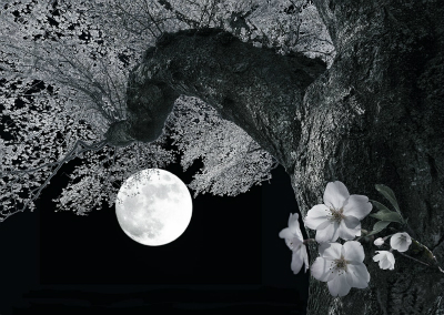 A満月夜桜・表紙用